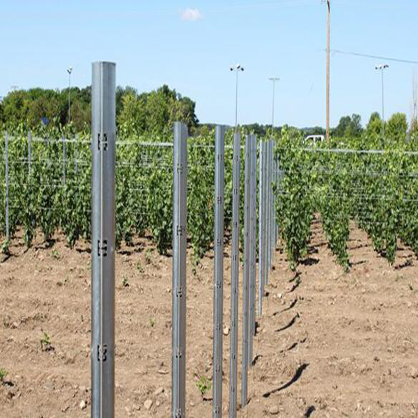 2.5m Verzinkte Vineyard Post, grapery Stake, Traube Beitrag